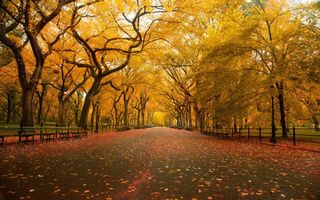 Photo free park, autumn, nature