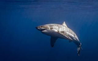 Бесплатные фото акула,хищник,океан,плавники,хвост,жабры,подводный мир
