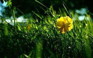Фото бесплатно анютины глазки, цветок, клумба