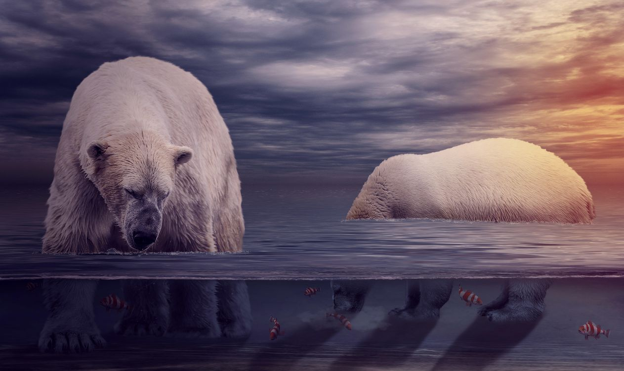 Фото бесплатно белый медведь, полярный медведь, арт - на рабочий стол