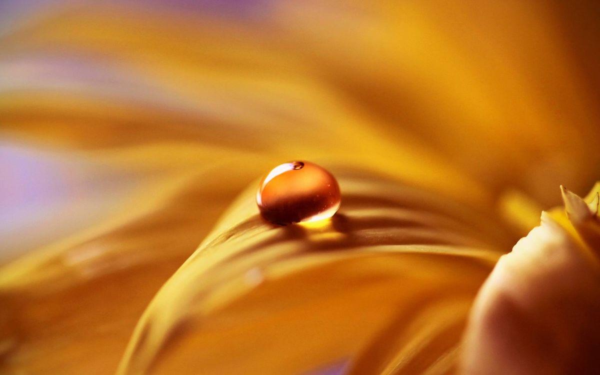 Фото бесплатно цветок, лепестки, желтые, капля, вода, роса, макро