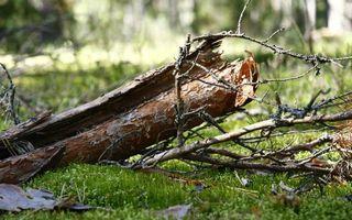 Бесплатные фото дерево,обломки,ветки,кора,трава,зеленая,природа