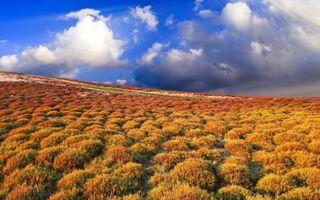 Фото бесплатно трава, дорога, природа
