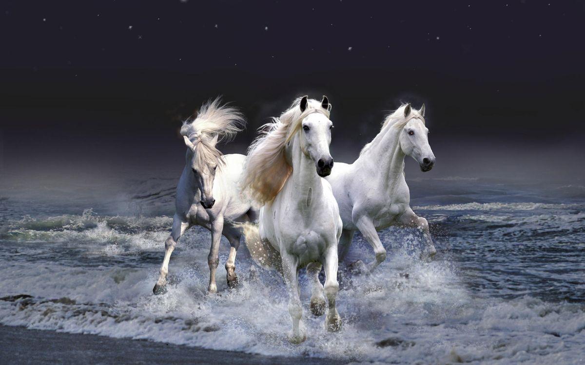 Фото бесплатно кони, белые, тройка - на рабочий стол