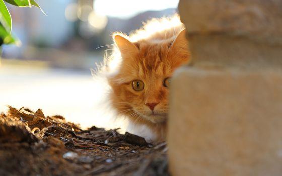 Photo free kitten, redhead, eyes