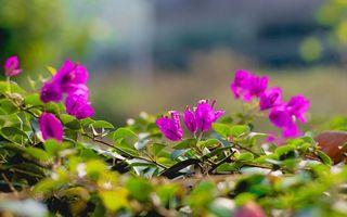 Фото бесплатно лепестки, розовые, зеленые