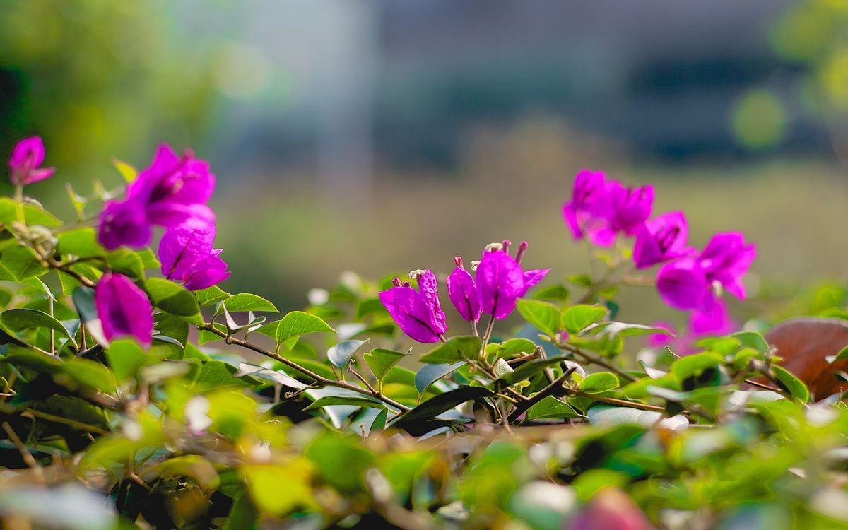 Фото бесплатно лепестки, розовые, зеленые - на рабочий стол
