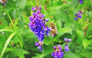 Заставки лето, зелень, растения