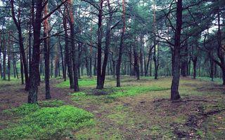 Заставки лес, деревья, трава