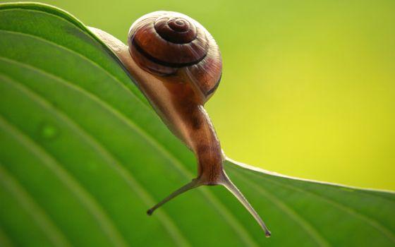 Photo free leaf, green, snail