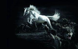 Фото бесплатно обои, конь, белый