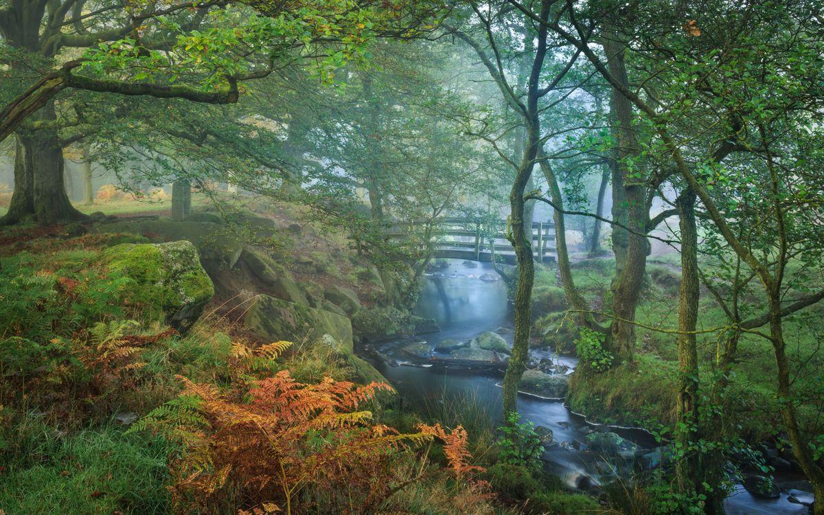 Обои пик Дистрикт, Великобритания, лес, деревья, река, мост, туман картинки на телефон