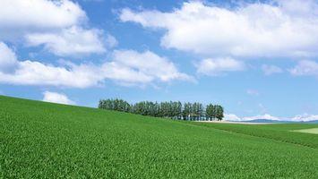 Фото бесплатно поле, трава, деревья, небо, облака, лето, тепло, день, пейзажи