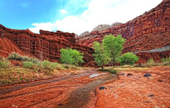 Фото бесплатно природа, скалы, деревья