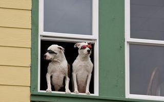 Бесплатные фото псы,очки,подоконник,дом,окно,лапы,шерсть