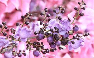 Фото бесплатно цветок, растение, бутоны