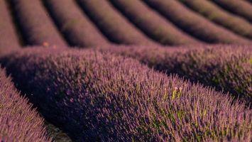 Фото бесплатно природа, плантация, растения