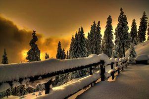 Бесплатные фото елки,зима,снег,ограждения,возвышенность,вечер,природа