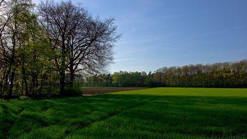 Бесплатные фото поле,трава,зеленый,небо,дерево,земля,коричневый