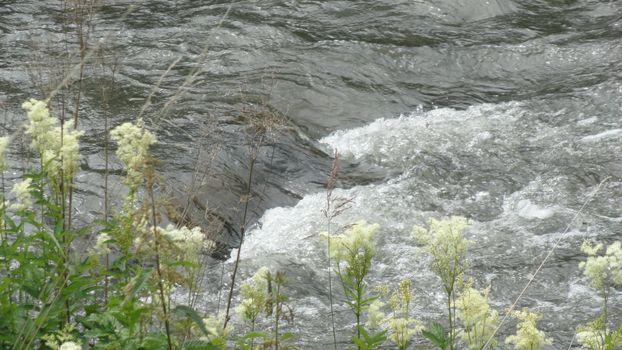 Фото бесплатно течение, вода, поток, река, трава, зеленый, цветок, белый, ветки, пороги, камни, пейзажи