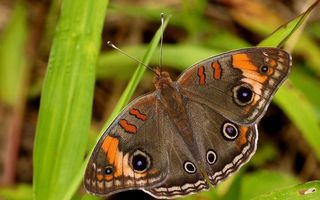 Photo free butterfly, wings, patterns