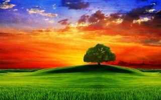 Фото бесплатно дерево, дуб, листья, крона, ветки, небо, облака, закат, зарево, трава, холм, поле, луг, пейзажи