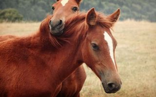 Photo free two horses, a horse, mane