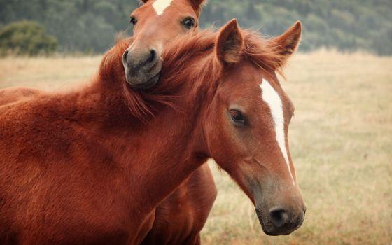 Фото бесплатно две лошади, лошадь, конь