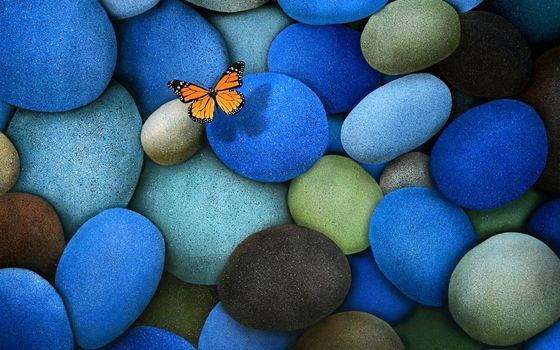 Фото бесплатно камни, бабочка, природа