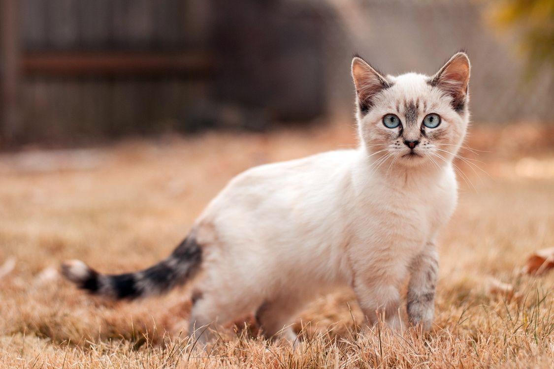 Фото бесплатно кот, котенок, маленький, уши, шерсть, окрас, порода, хвост, усы, взгляд, трава, кошки, кошки