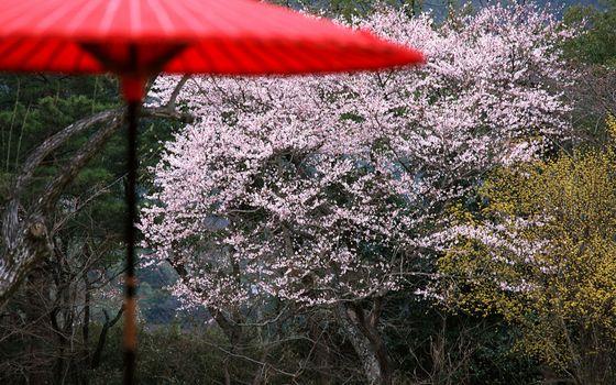 Фото бесплатно кусты, деревья, цветы