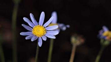 Бесплатные фото лепестки,сиреневый,стебель,желтый,тычинки,пестики,цветы