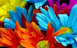 Фото бесплатно лепестки, сердцевина, синий, голубой, желтый, цветы