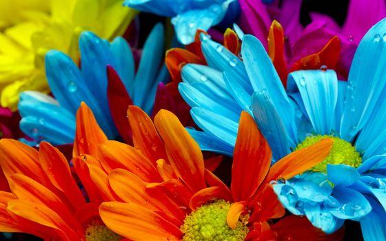 Заставки лепестки, сердцевина, синий, голубой, желтый, цветы