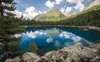 Фото бесплатно лес, елки, вода
