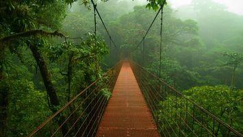 Бесплатные фото мост,джунгли,амазонка,деревья,тропики,лес,листья