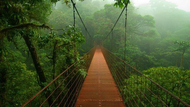 Photo free bridge, jungle, amazon