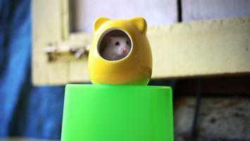 Обои мышь, белая, хвост, зубы, нос, глаза, шерсть, квартира, дом, игрушка, домик, желтый