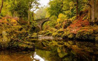 Бесплатные фото небо,река,дерево,листья,мост,забор,мох