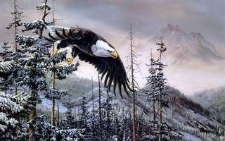 Бесплатные фото орел,перья,крылья,полет,когти,ноги,клюв