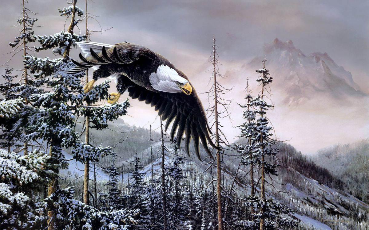 Photos for free eagle, feathers, wings - to the desktop