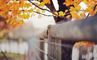 Заставки парк, забор, листья