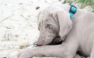 Photo free collar, puppy, eyes