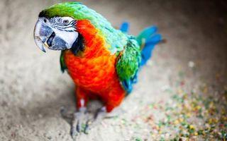 Фото бесплатно попугай, цветной, глаза, клюв, лапы, перья, птицы