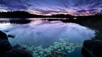 Бесплатные фото пруд,кувшинки,лес,небо,закат,облака,поздний