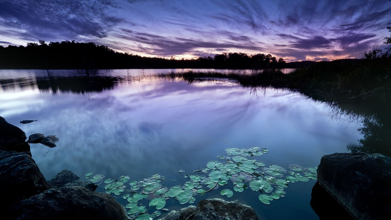 Фото бесплатно пруд, кувшинки, лес, небо, закат, облака, поздний, вечер, пейзажи, пейзажи