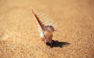 Обои ракушка, песок, пляж, лето, море, отдых, юг, океан, тень, солнце, природа, подводный мир