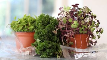 Photo free flowers, grass, vases