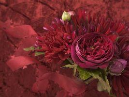 Бесплатные фото цветок,роза,лепестки,листья,бутон,ленточка,красная
