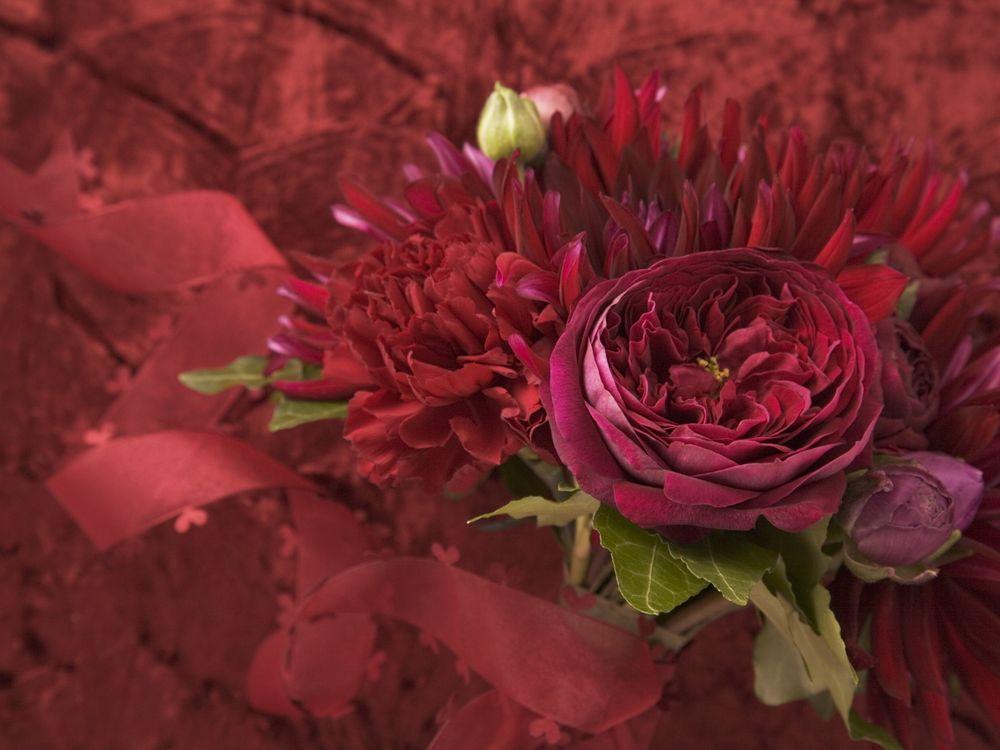 Фото бесплатно цветок, роза, лепестки - на рабочий стол